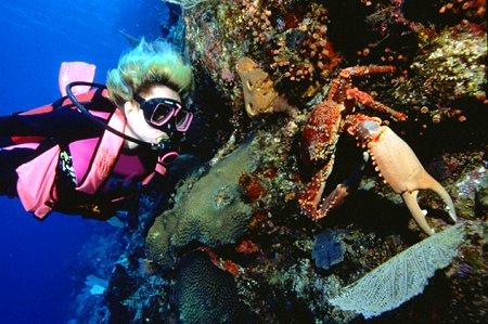 Buceo arrecifes RD