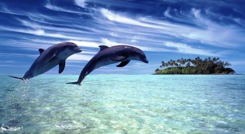 delfines RD
