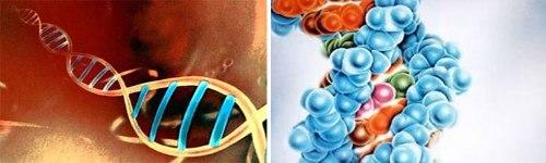 Genoma VIH - Humano