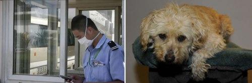Perro Causa peste en china