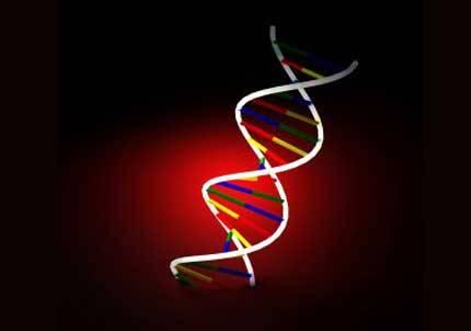 PRE-genoma-cancer