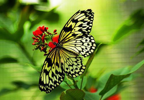 Mariposa Rep. Dom