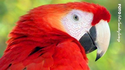 Mundomar Papagayo Por Felix Sáchez Luengo